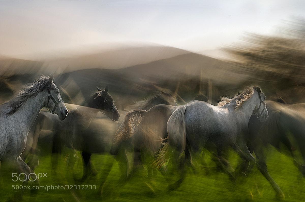 Photograph Hert by Milan Malovrh on 500px