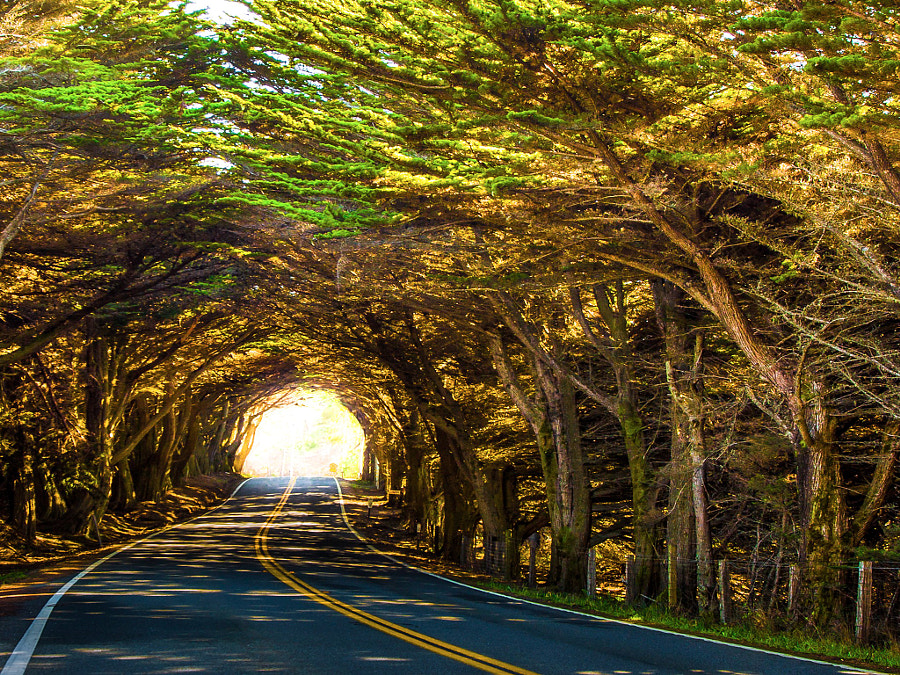 Tree Tunnel by Harpreet Grewal on 500px.com