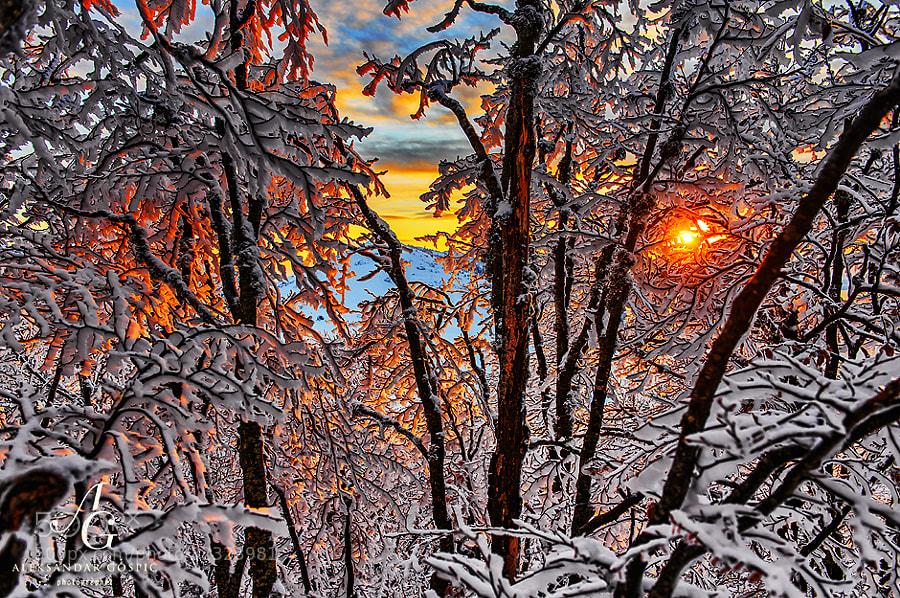 Last rays of sunshine penetrate into the rime ice covered forest on Zavižan on Velebit mountain