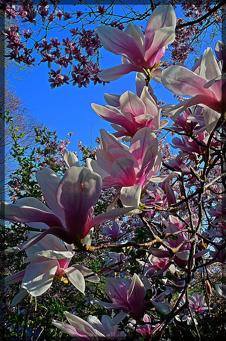 Photograph Blue skies and flowers by Sue Vanderschans on 500px