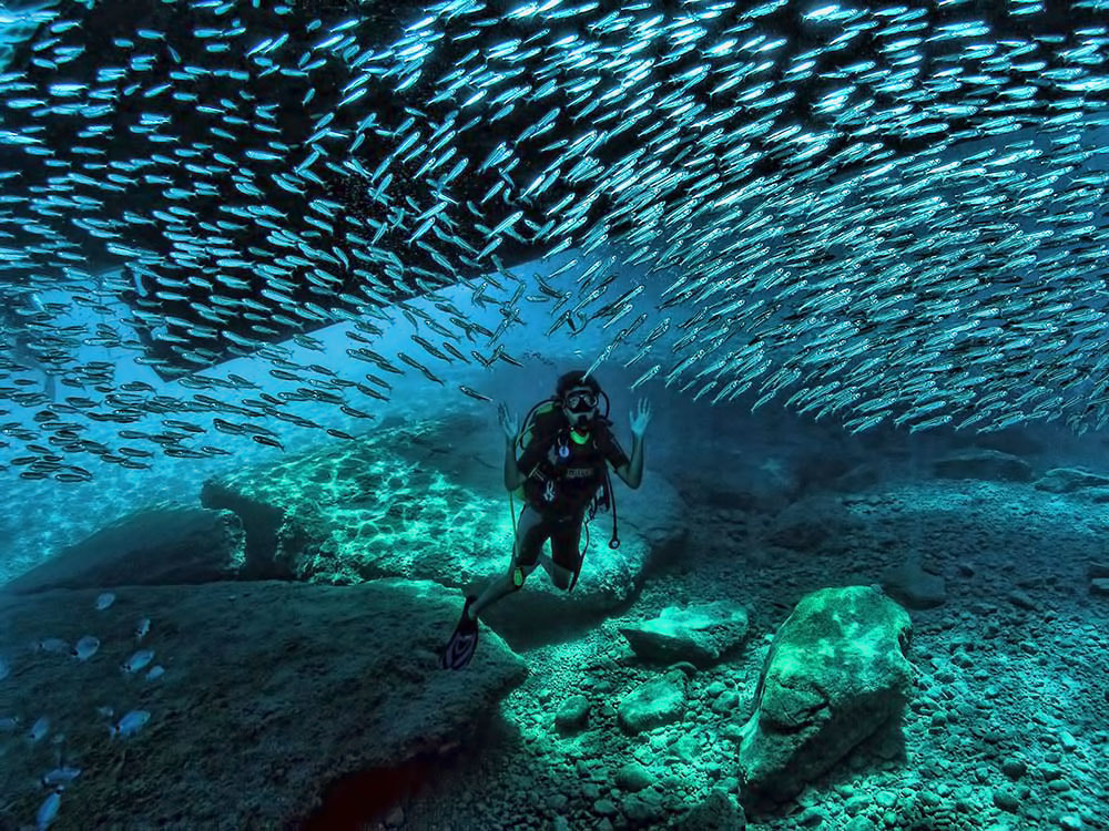 Photograph Fish Frenzy and Young Diver by ColorsofOceans on 500px