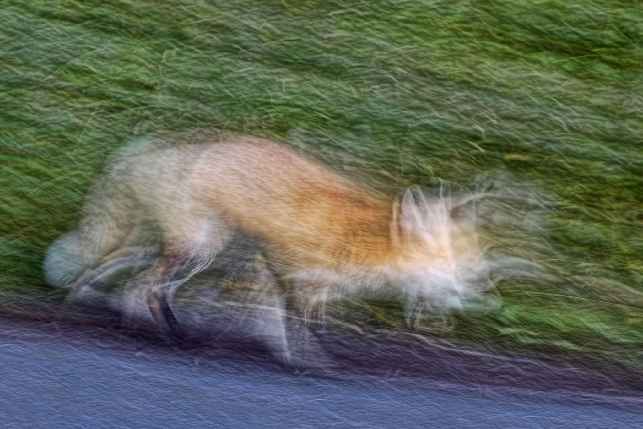 Photograph Fox Descending a Staircase by Gary Holmes on 500px