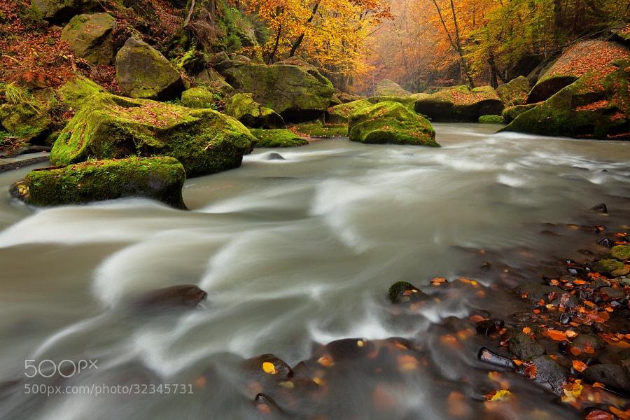 Photograph Autumn creek by Daniel Řeřicha on 500px
