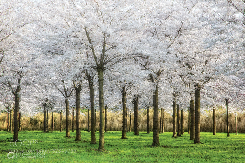 Photograph Springfield by Lars van de Goor on 500px