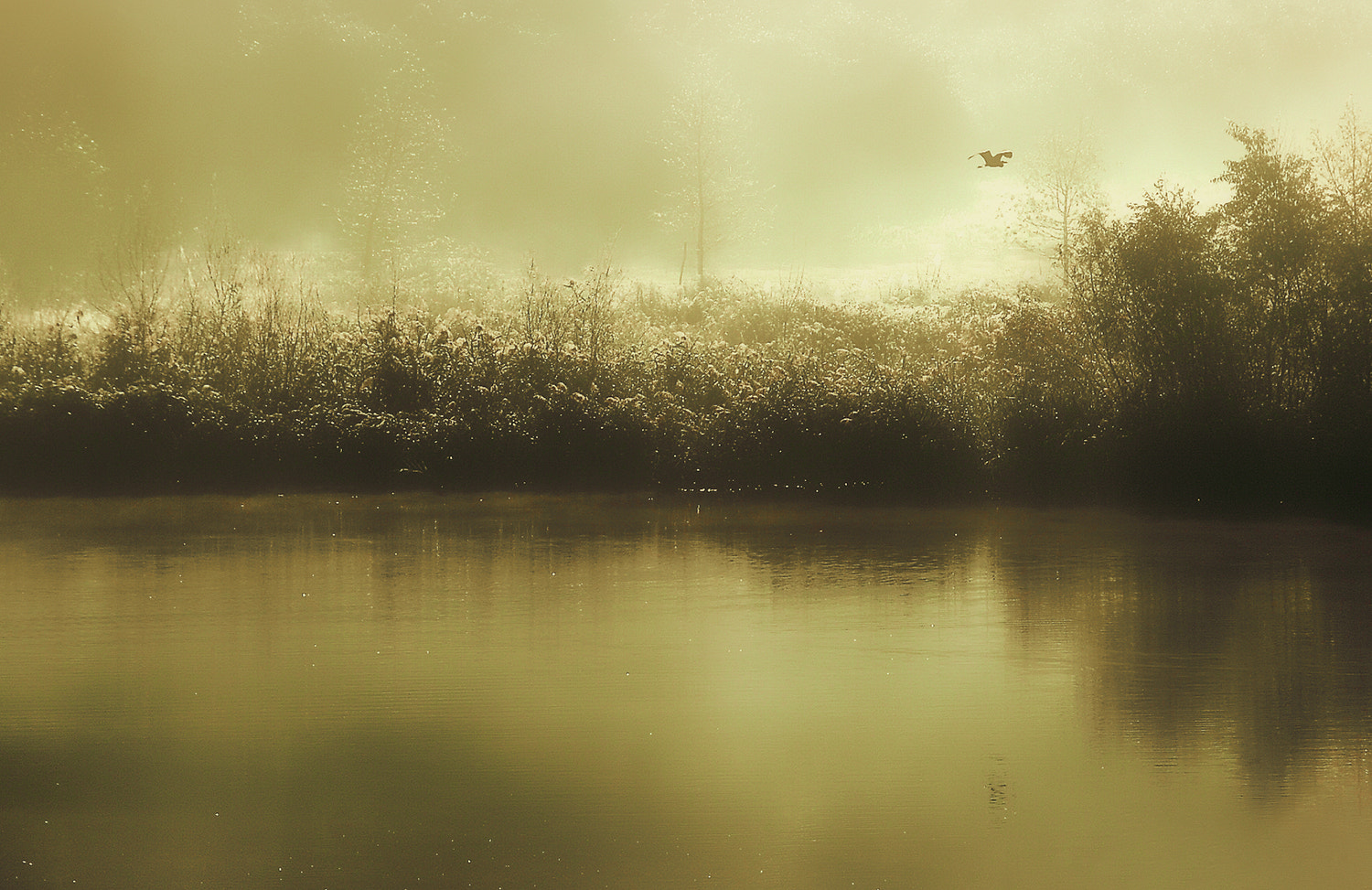 Photograph morning flight by Andy 58 on 500px