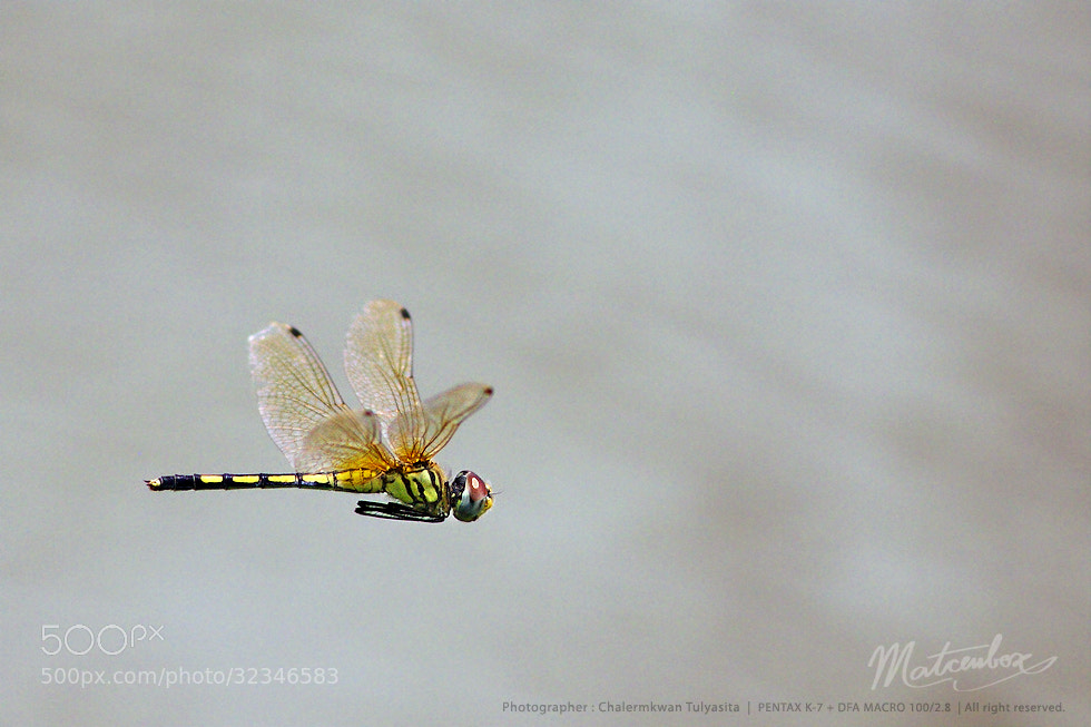 Photograph dragonfly flying by Matcenbox  on 500px