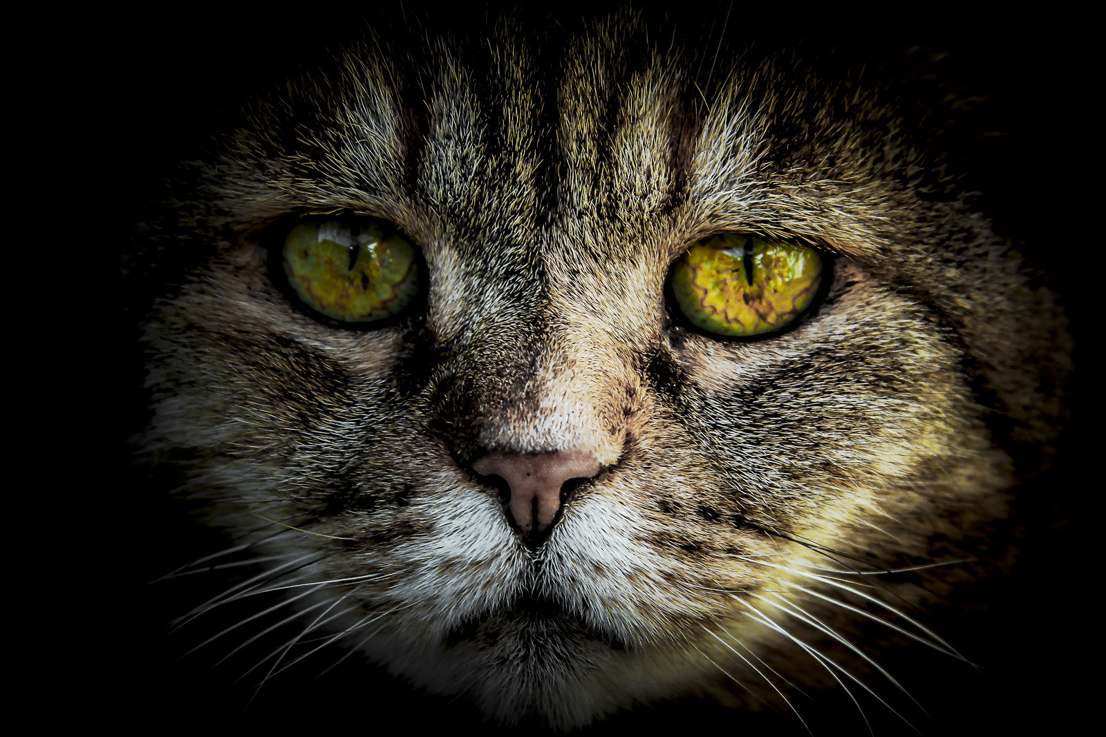 Photograph Cat by Donato Romagnuolo on 500px