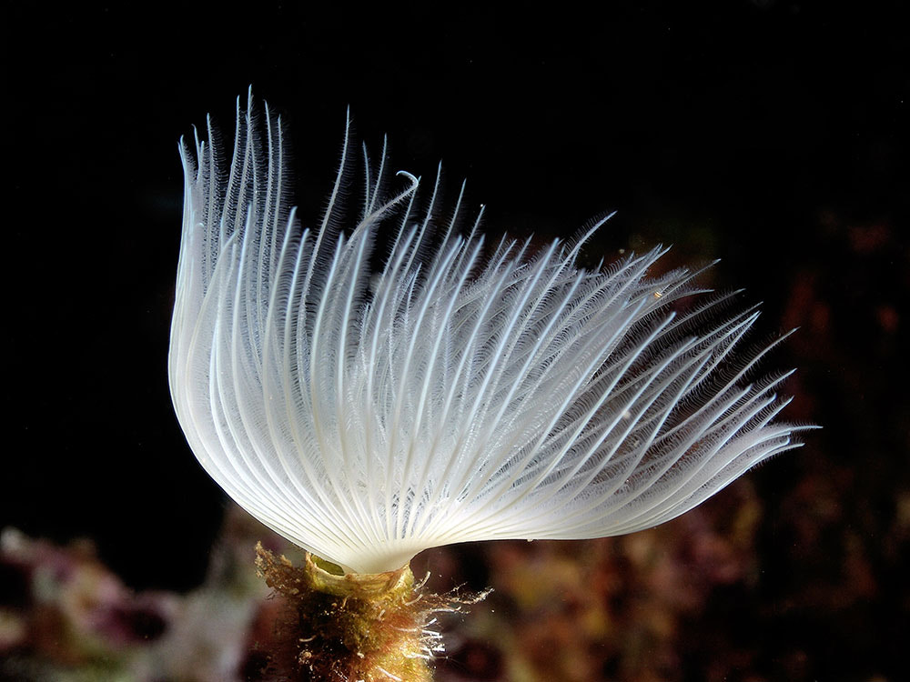 Photograph Worm  or Flower? by ColorsofOceans on 500px