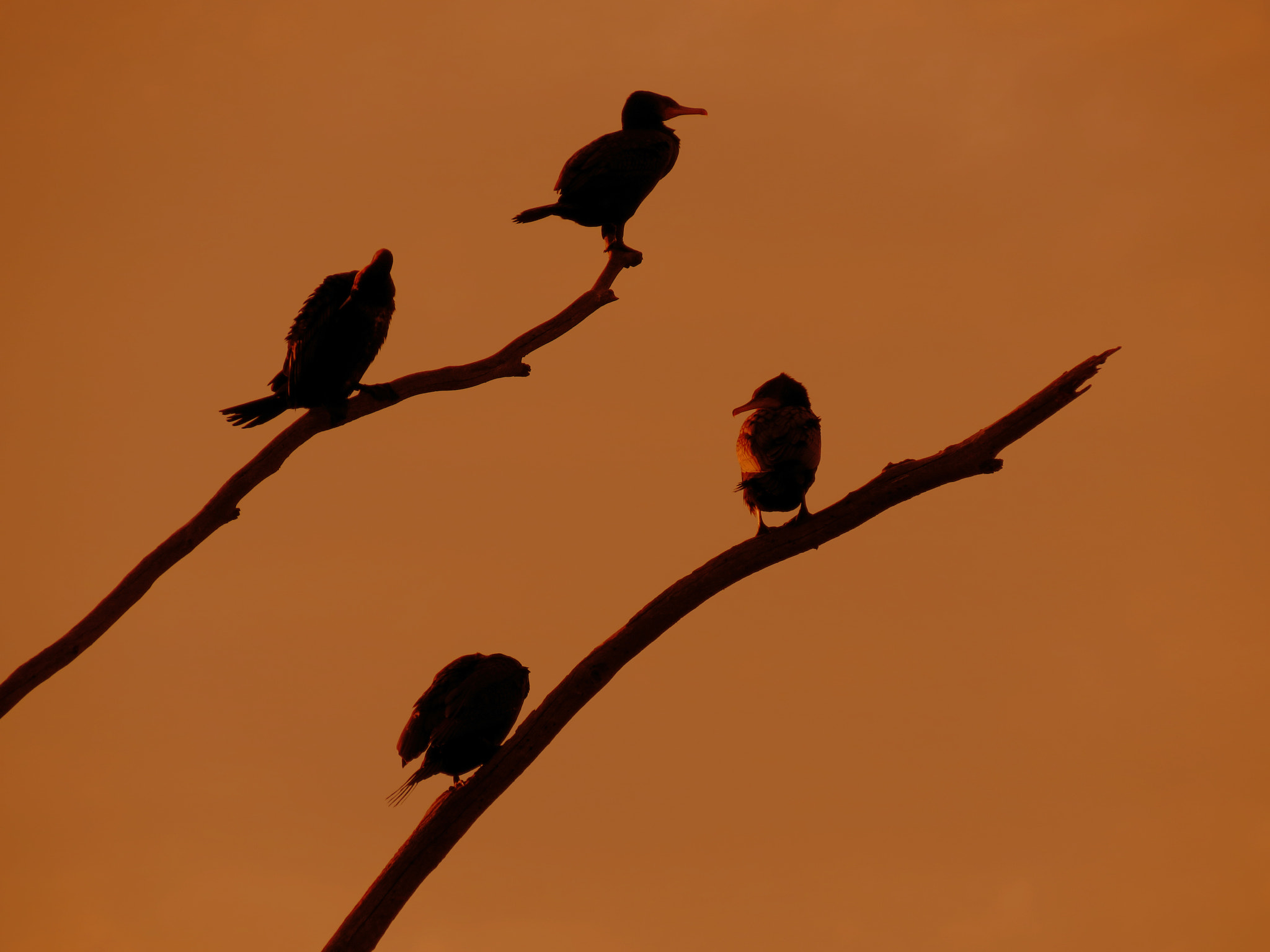 Photograph pecking order by alf M on 500px
