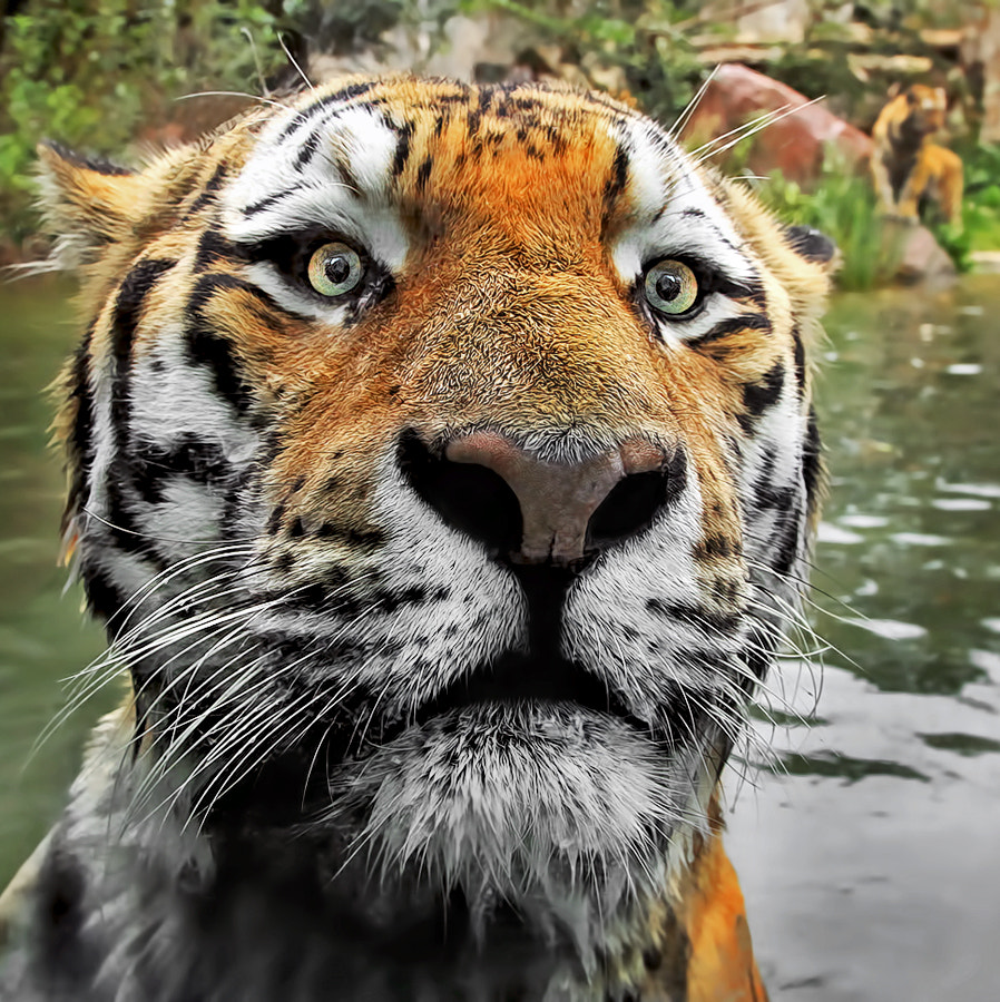Photograph Oops! by Klaus Wiese on 500px