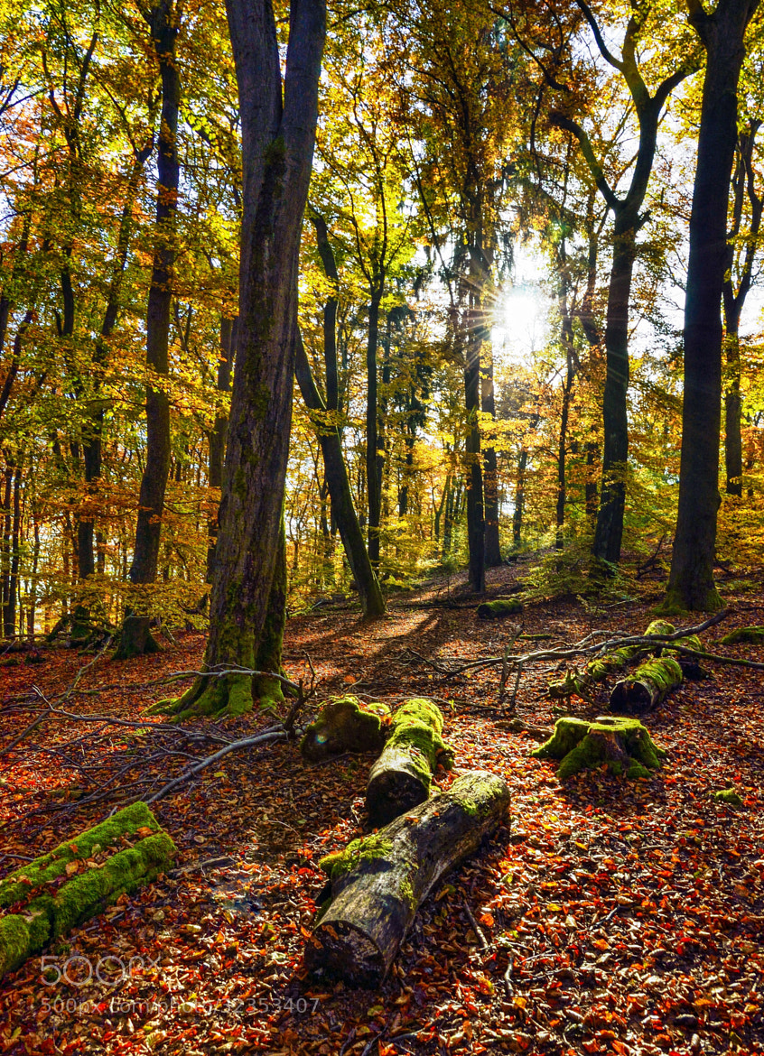 Photograph Wood, colours and the sun by Marko Gaßmann on 500px