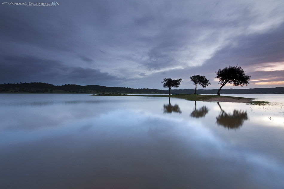 """Photograph  """" Three simple trees """" by André  Domingos on 500px"""