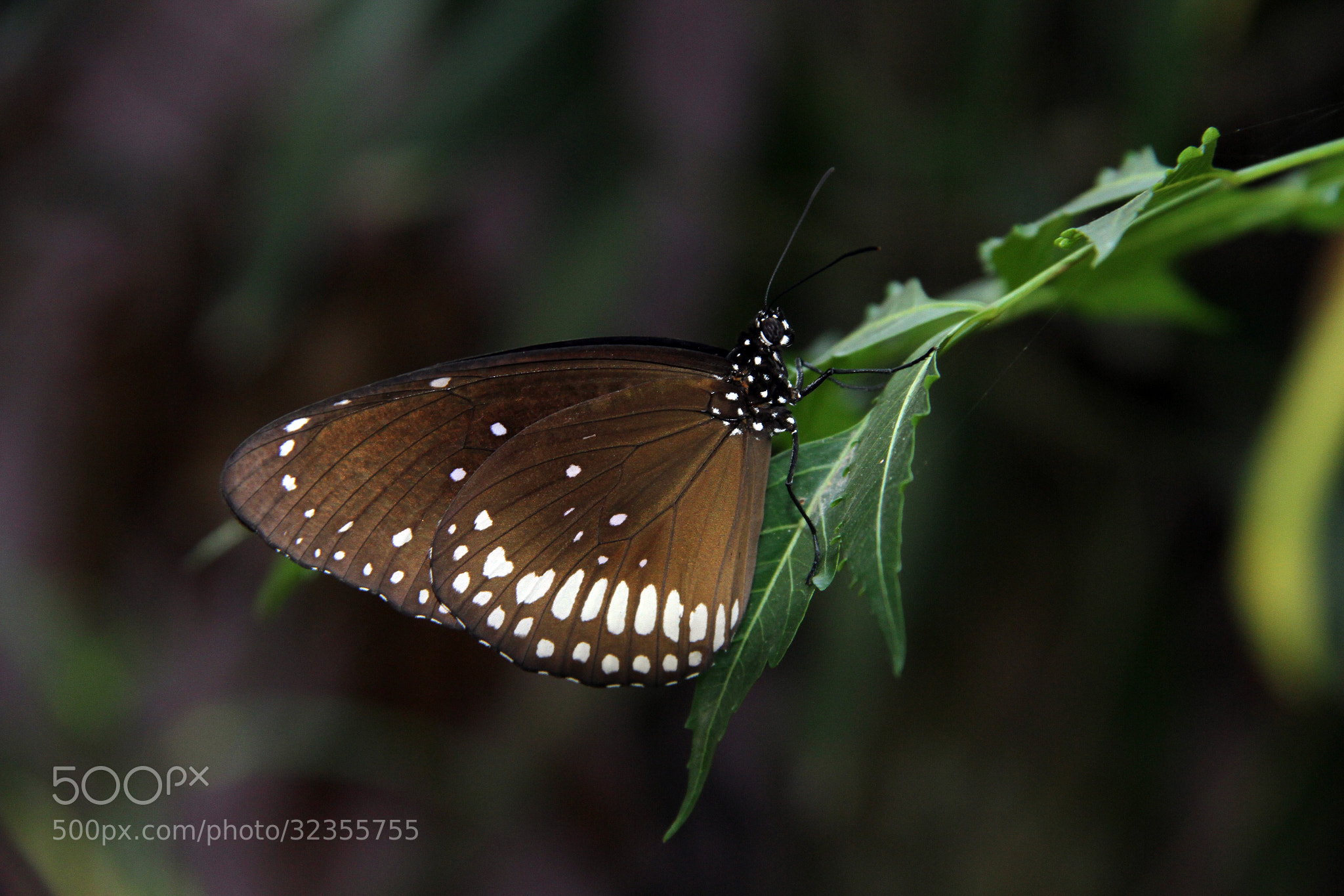 Photograph Butterfly by Prasul Prasanthan on 500px