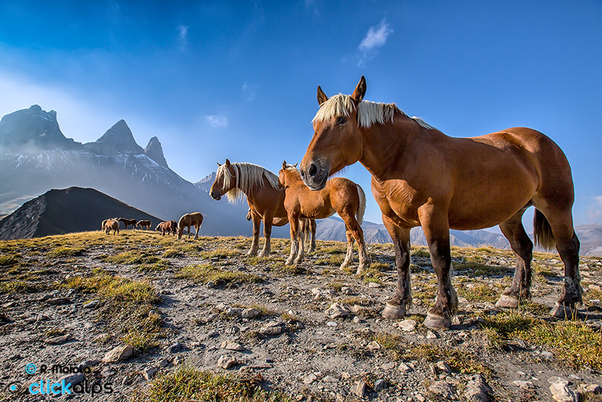 Photograph Chevaux by Roberto Sysa Moiola on 500px