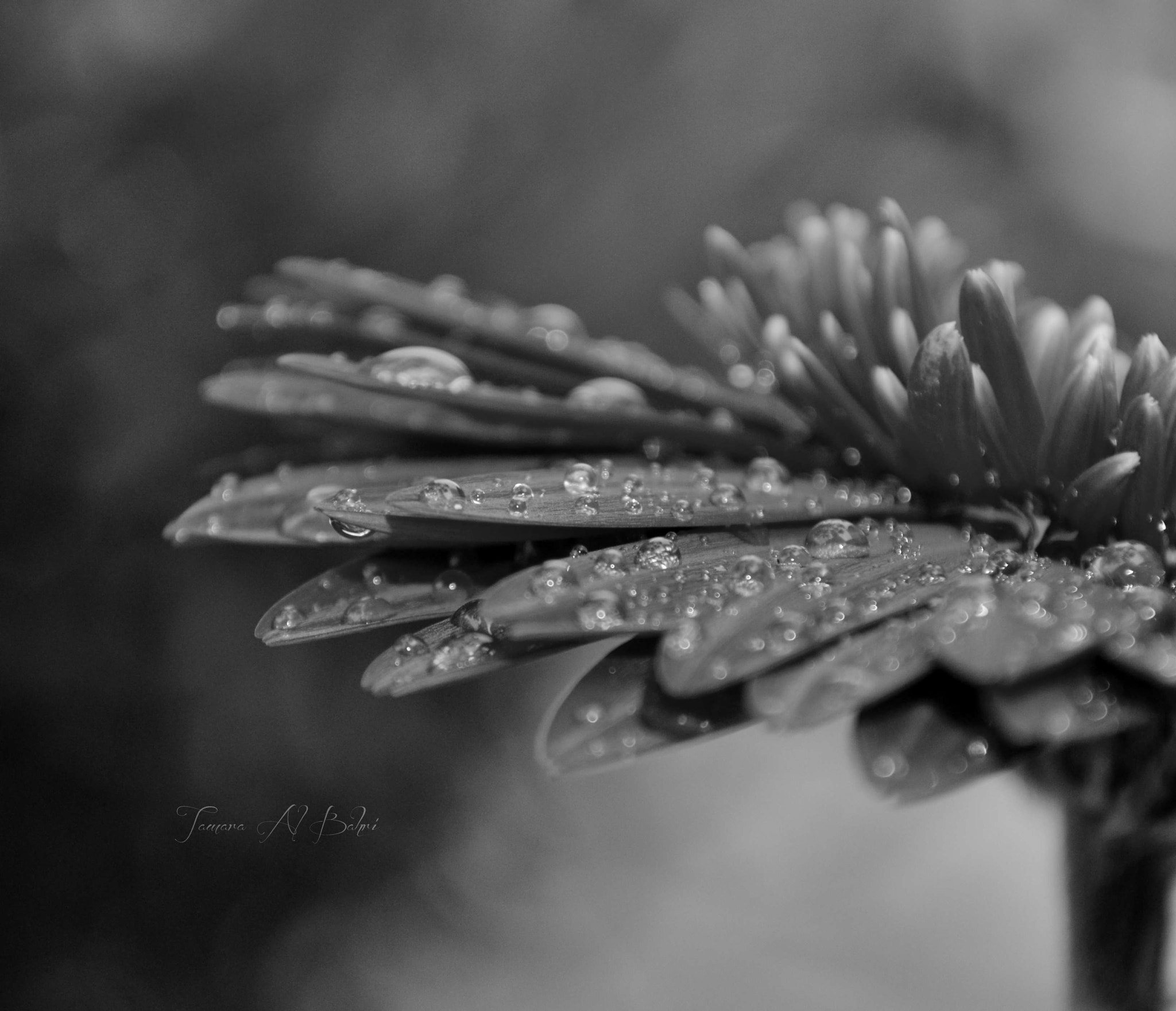 Photograph Rainy Day by Tamara Al Bahri on 500px
