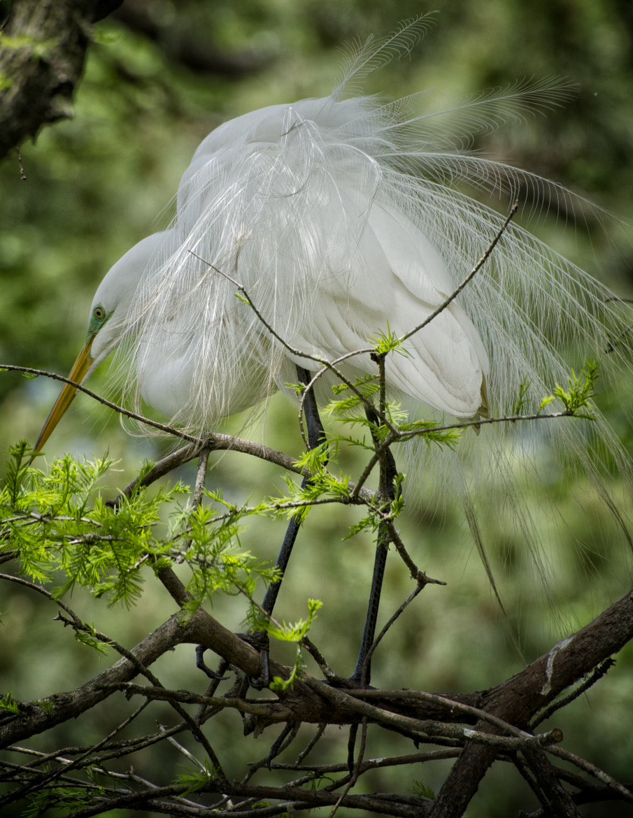 Photograph Nesting time by Nicole Roloff on 500px