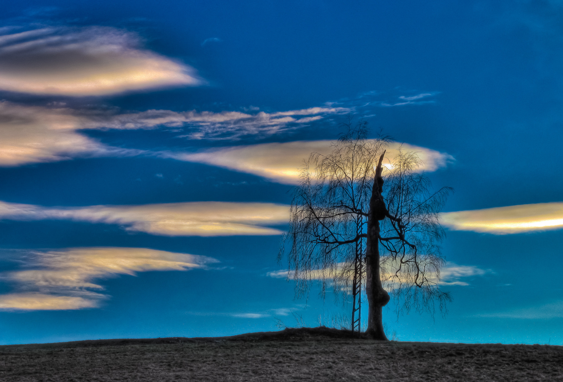 Photograph the tree by Paul Werner Suess on 500px