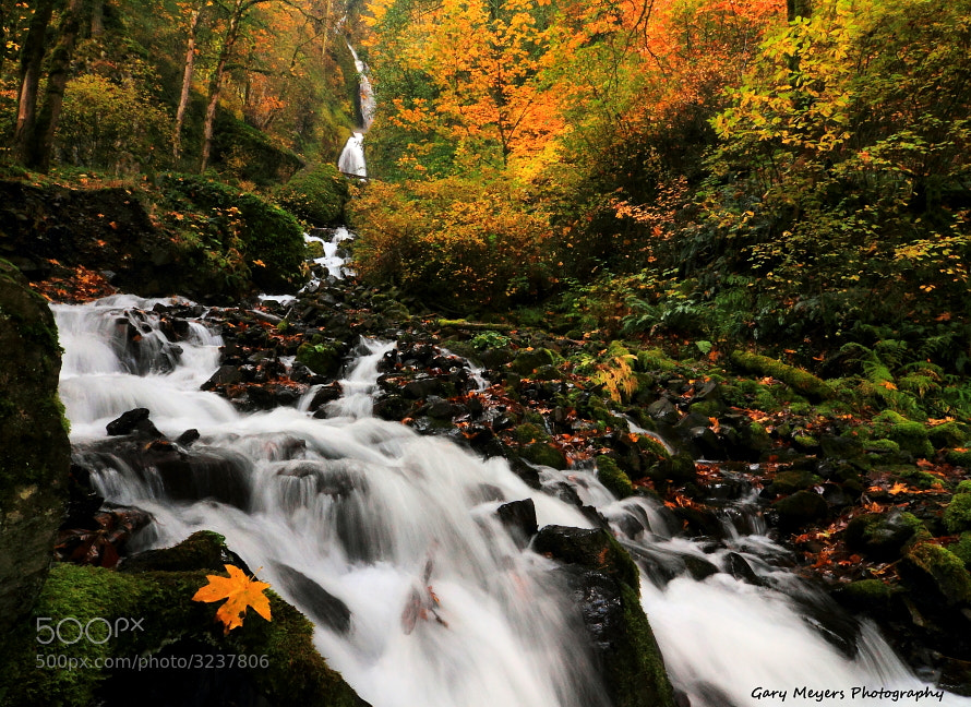 Photograph Fall at Wahkeena Creek Falls by Gary Meyers on 500px