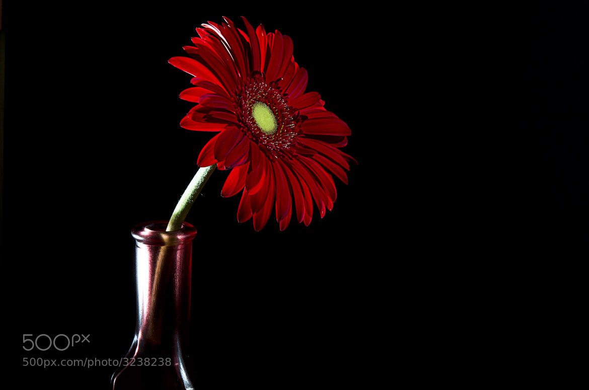 Photograph Rojo sobre negro by Jose Antonio Alba on 500px