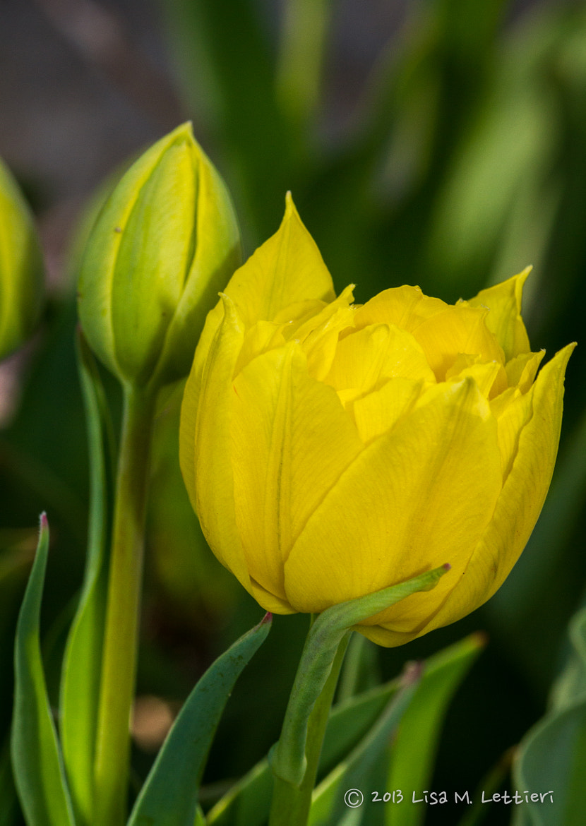 Photograph Yellow by Lisa Lettieri on 500px