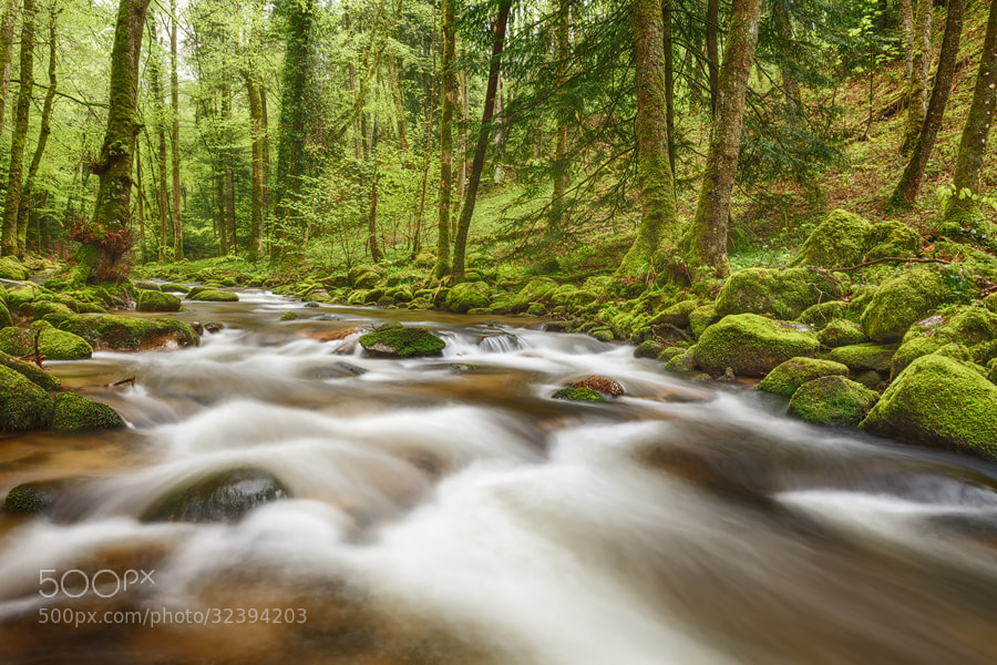 Photograph Black Forest Creek by Michael  Breitung on 500px