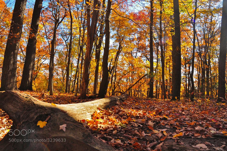 Photograph glowing woods by Elissar Khalek on 500px