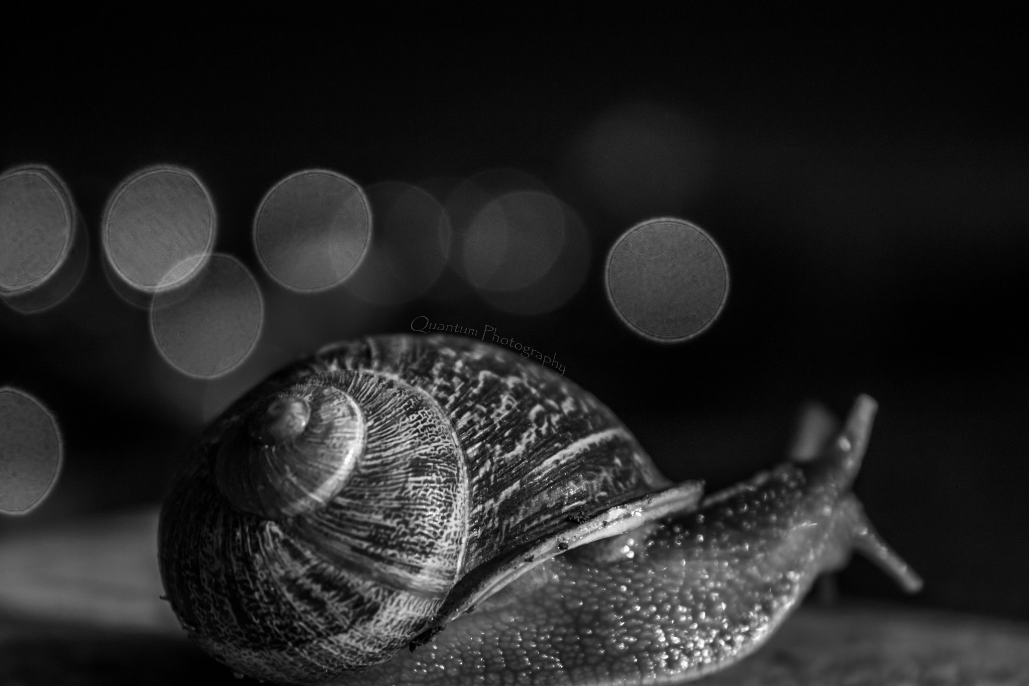 Photograph Snail. by Multivers Quantique on 500px