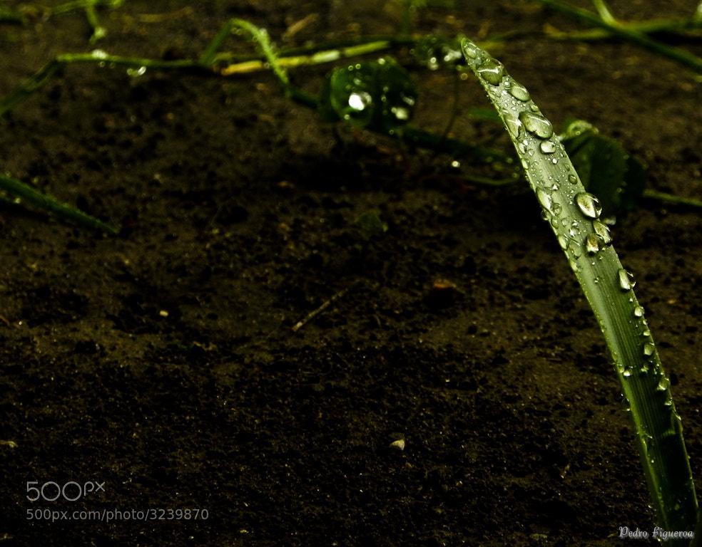Photograph Después de la lluvia / After the rain by Pedro Luis Figueroa on 500px
