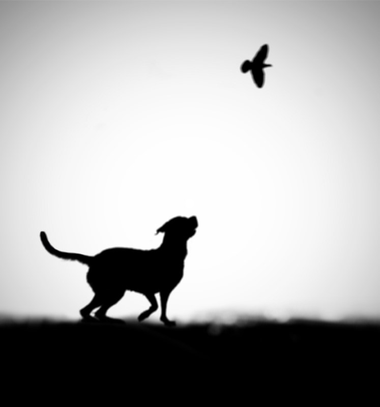 Photograph The Clue by Hengki Lee on 500px