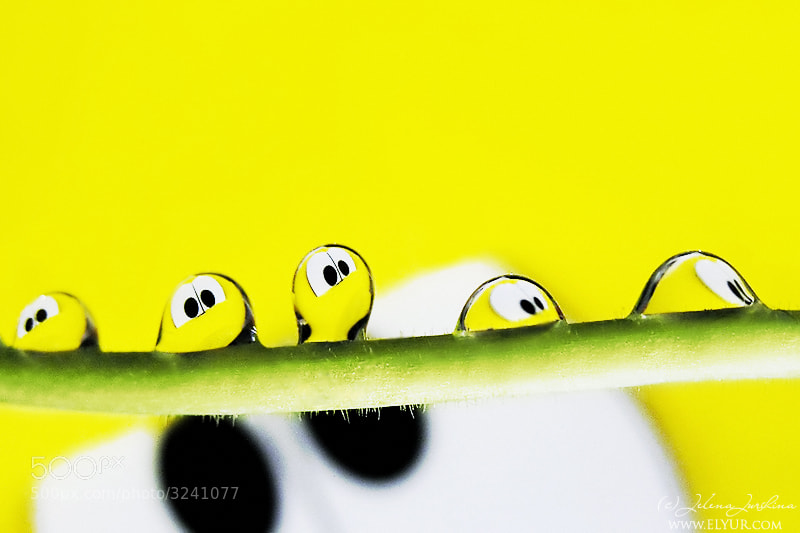 Photograph Tiny smileys :) by Jelena Jursina on 500px