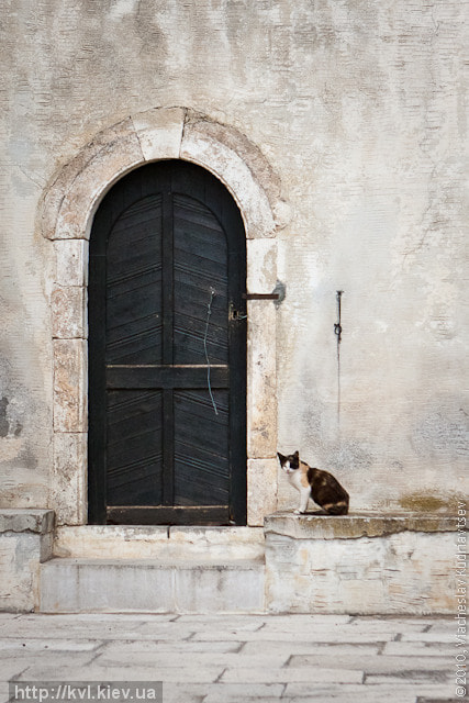 Photograph Cat and door by Viacheslav Kudriavtsev on 500px