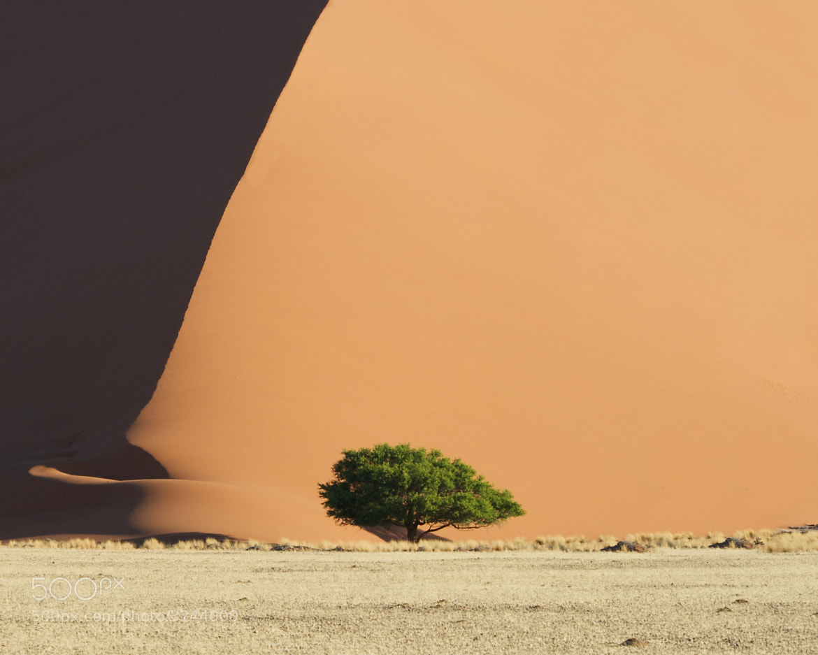 Photograph The Foot of the Dune by duncan george on 500px