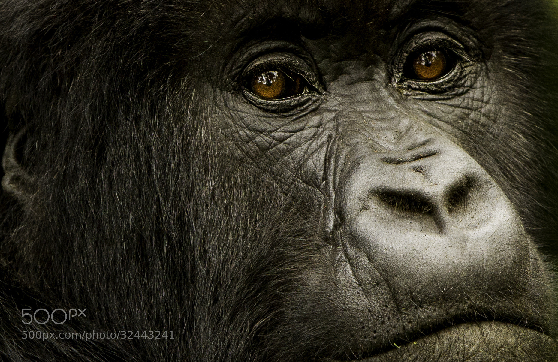 Photograph The Look by Batu Berkok on 500px