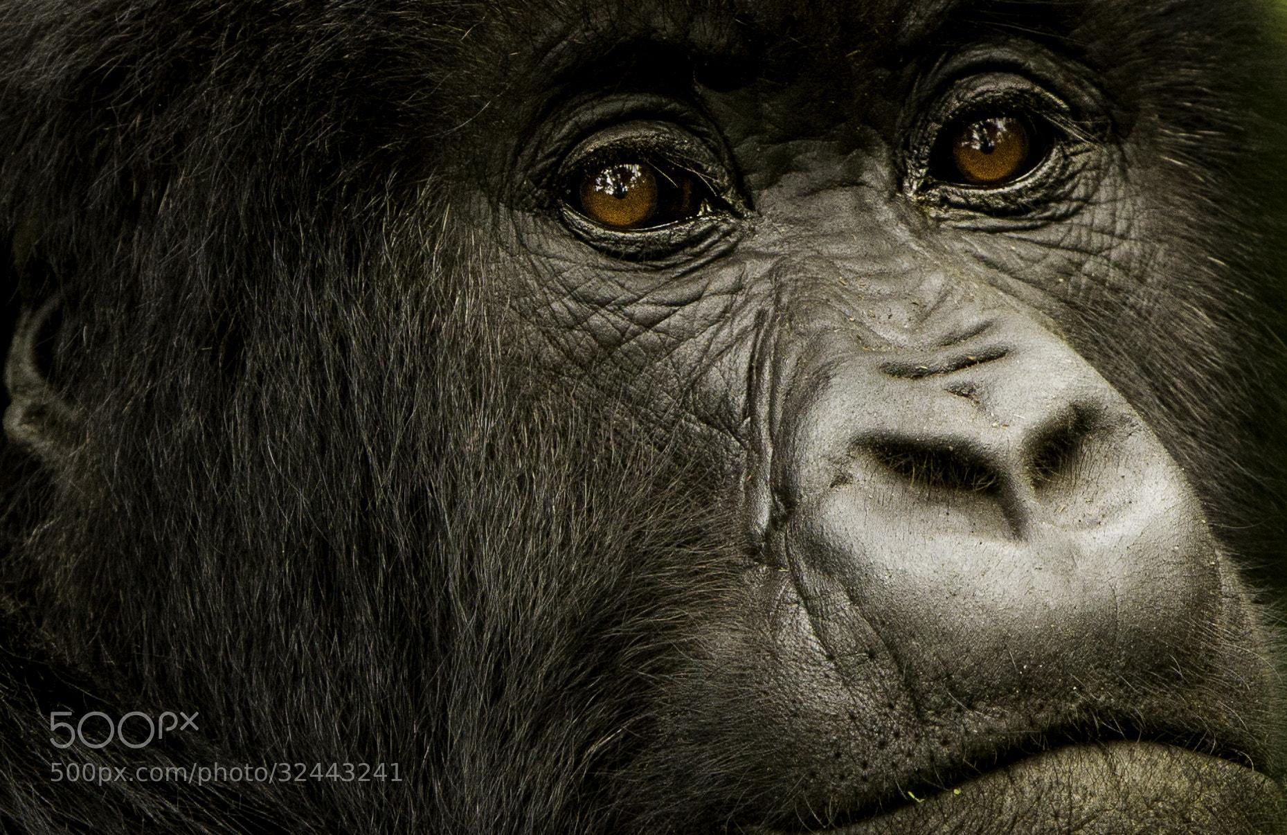 Photograph The Look by Batu Berkok on 500px