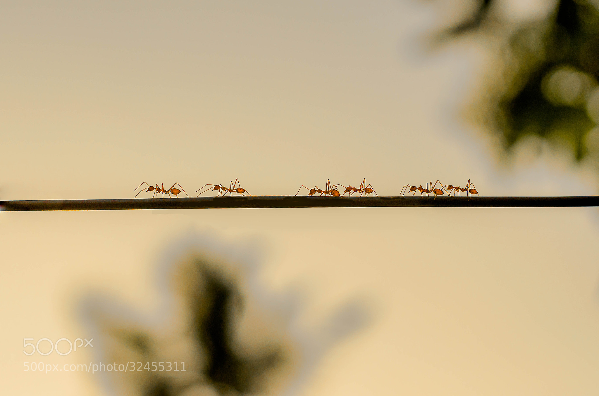 Photograph Ants marching by Badaru Din on 500px