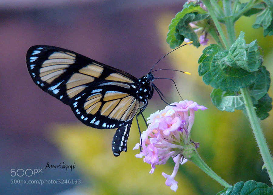 """Photograph """"Butterflies are flowers with wings"""". by Lety Monteiro on 500px"""