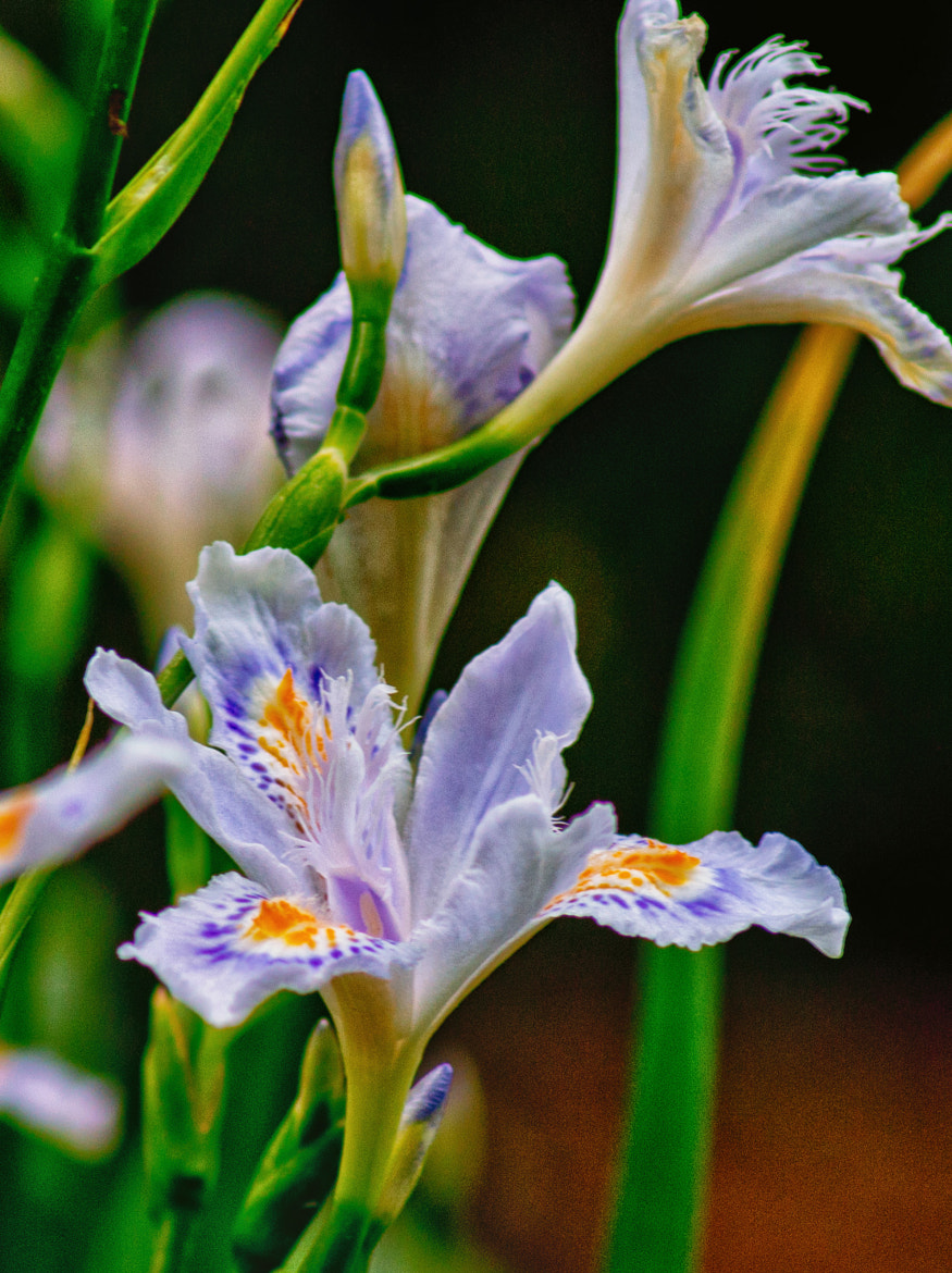Photograph Iris by James Gramm on 500px