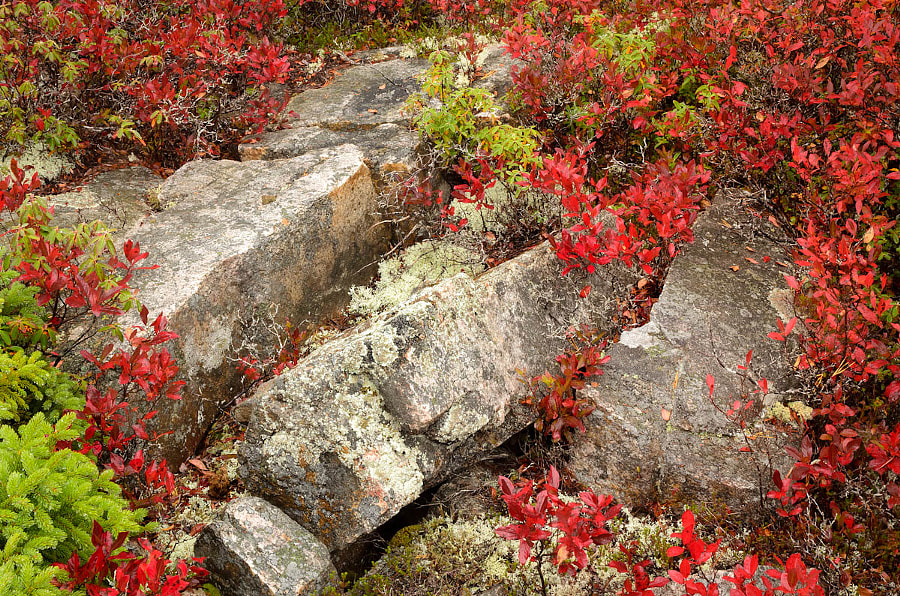 Acadia colors
