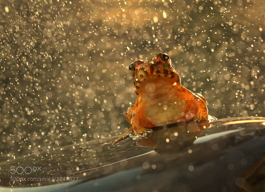 Photograph under the pouring rain by shikhei goh on 500px