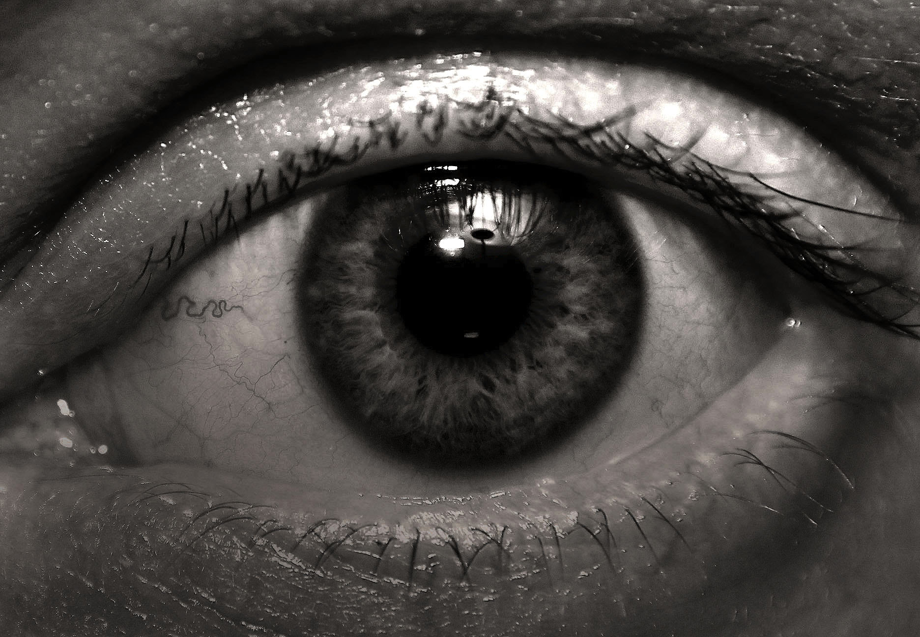 Photograph Eyeball by Stephen Livingston on 500px