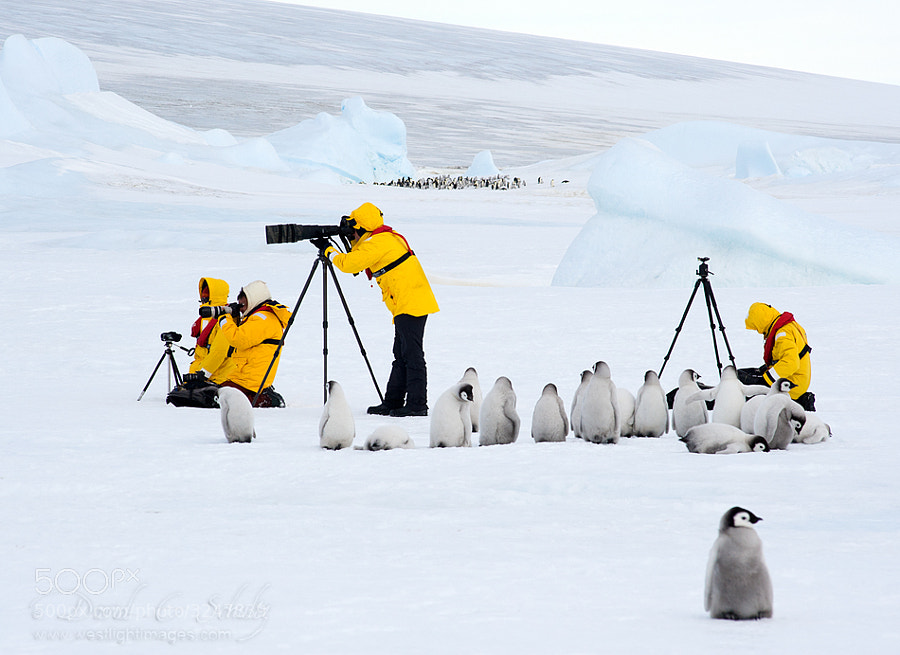 Photograph Photo Workshop...polar style by David C. Schultz on 500px