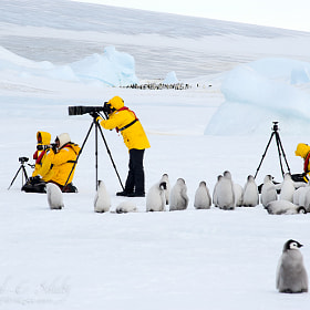 Photo Workshop...polar style by David C. Schultz (westlight)) on 500px.com