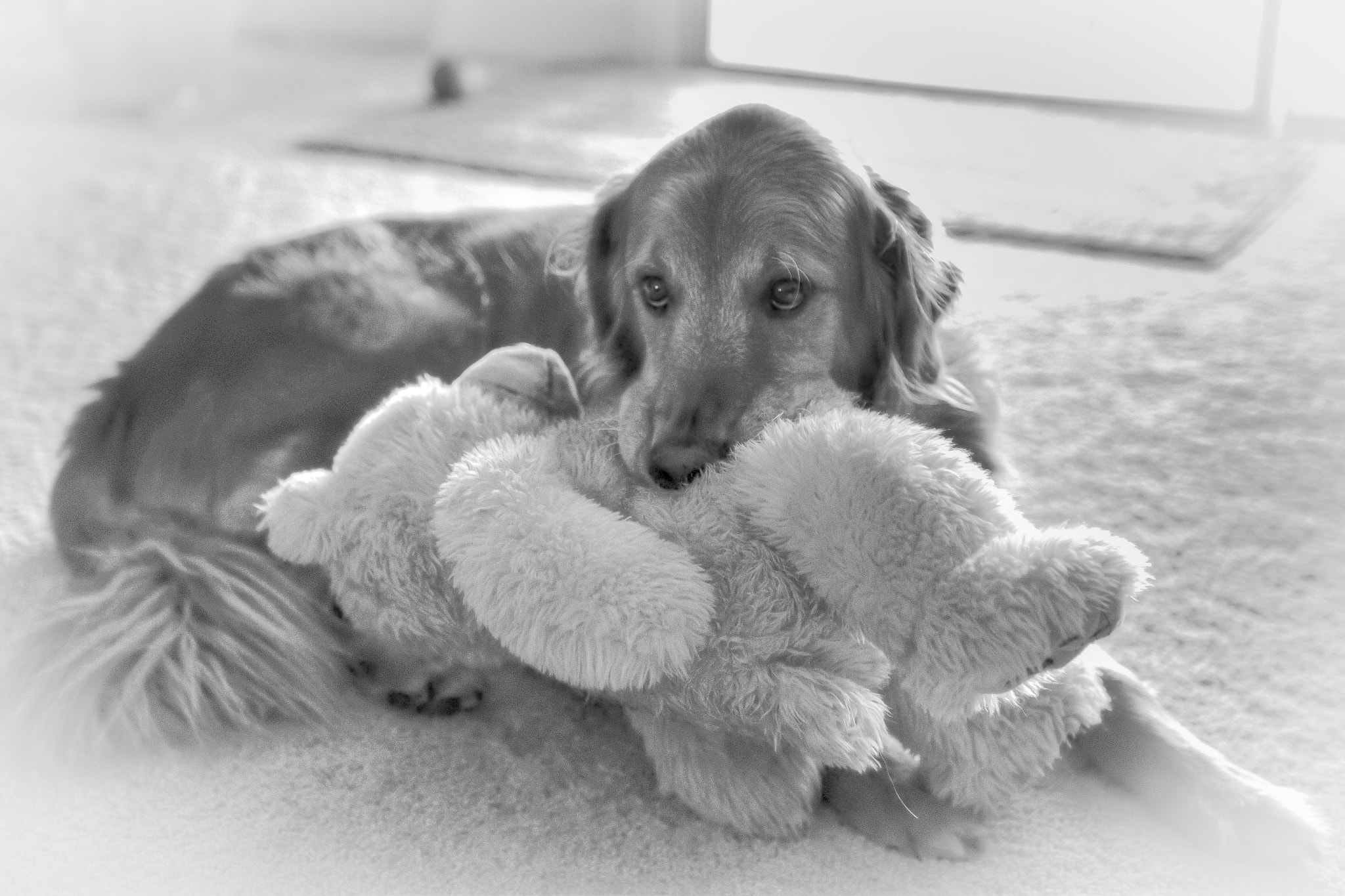 Photograph Casey and the bear by Chester Johnson on 500px