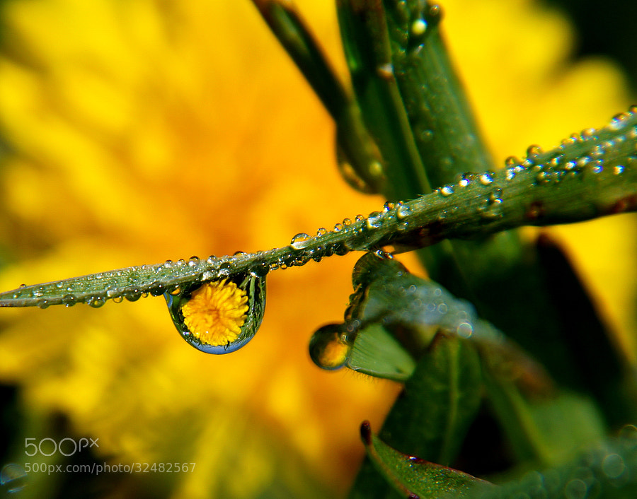 I am passionate about macro photography, and dew/water drop macro photography is one of my favorite things.