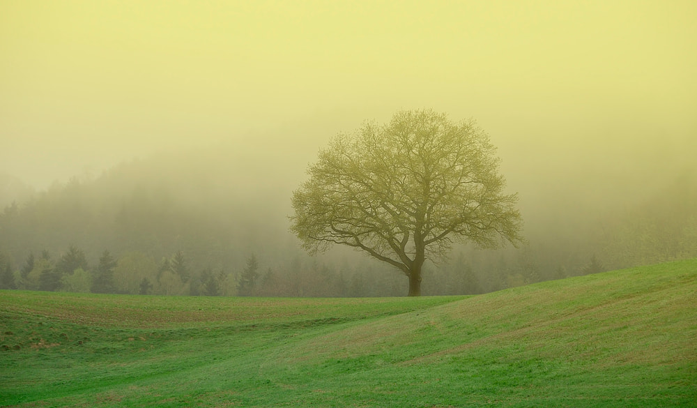 Photograph tree in the morning mist by Silvio E. on 500px