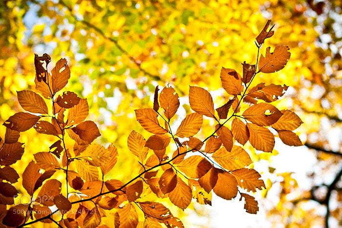 Photograph autumn colors by Stefanie Lategahn on 500px