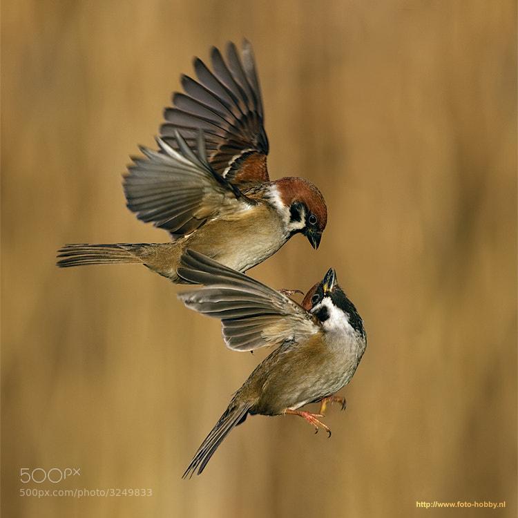 bird hd wallpaper santabanta