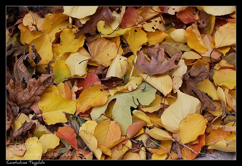 Photograph Autumn by Konstantinos Tsagkalidis on 500px