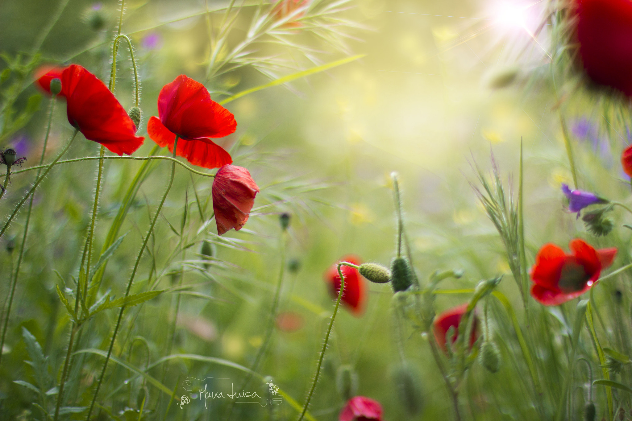 Photograph mess in the field by Maria Luisa Milla on 500px