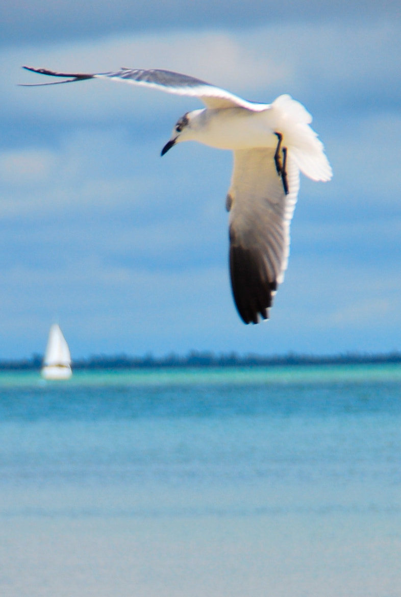 Photograph Seagull  by Beth Pearson on 500px